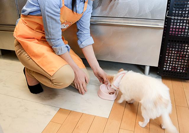 ペットの世話